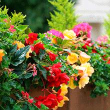 Blomster Sorø, gul og røde blomster