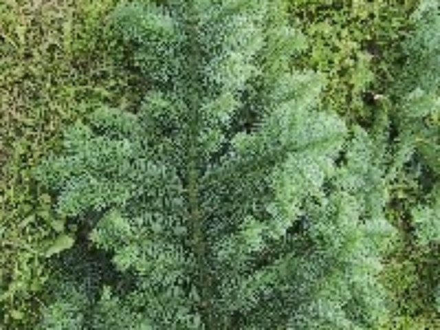 Pyntegrønt Sorø, Grøn ungdomsgren
